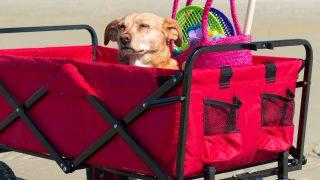 Best Beach Cart
